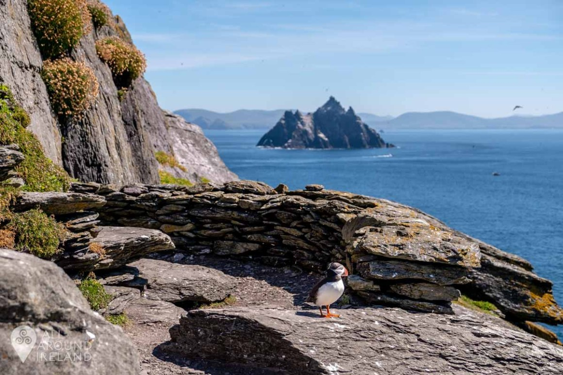 A Puffin keeping watch over Little Skellig in the distance.