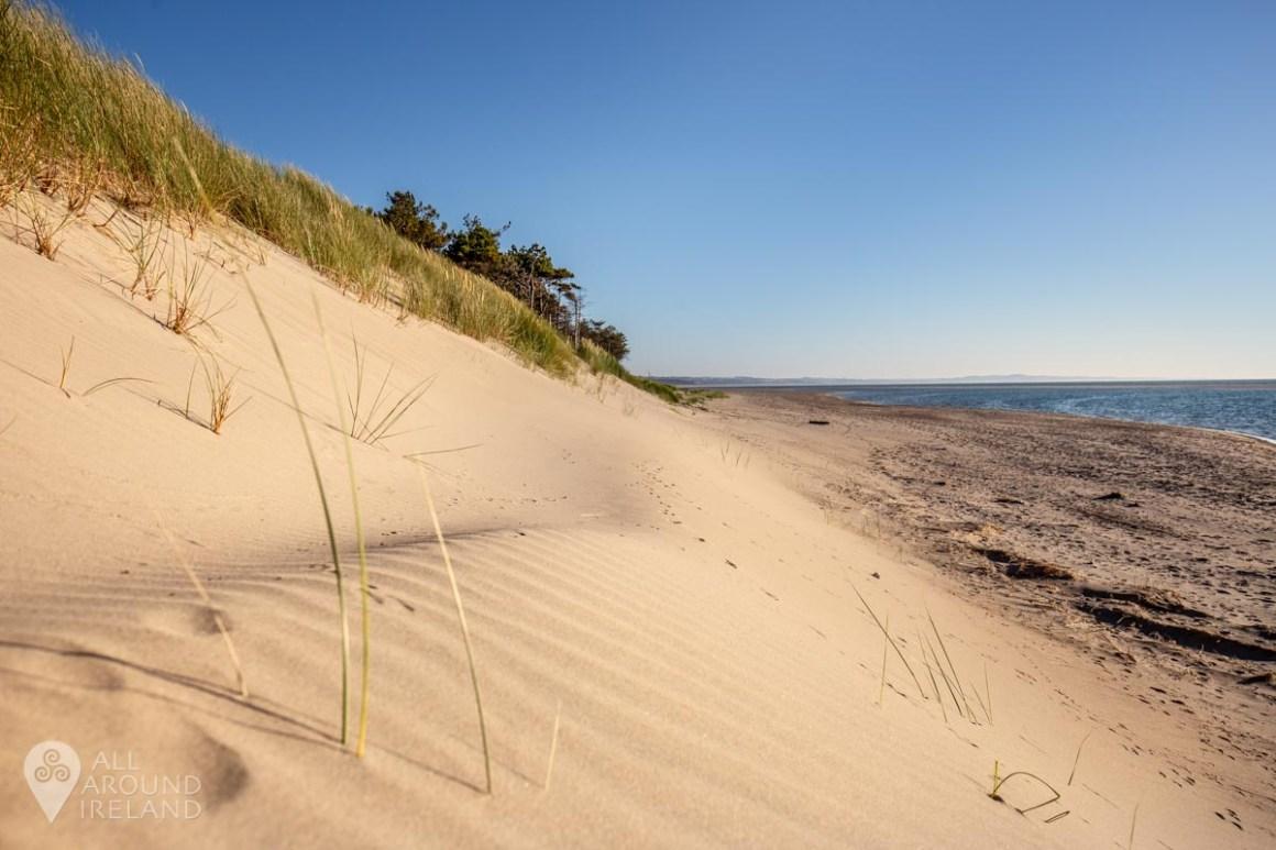 Golden sand dunes at Curracloe Beach