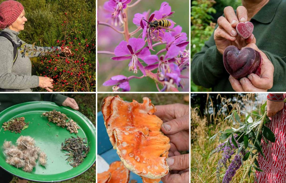 Wild Food Mary - foraging workshops in Offaly and Galway