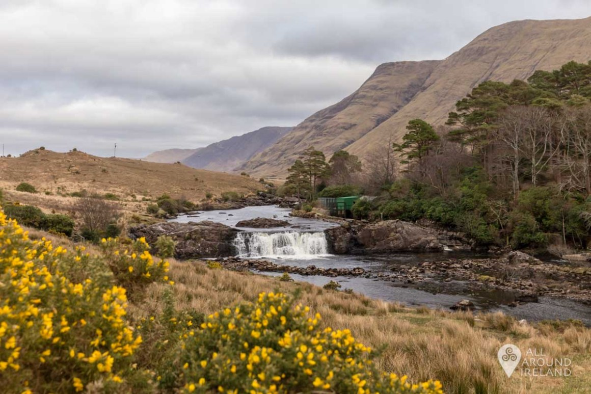 Aasleagh Falls with mountains in the background and yellow gorse in the foreground.