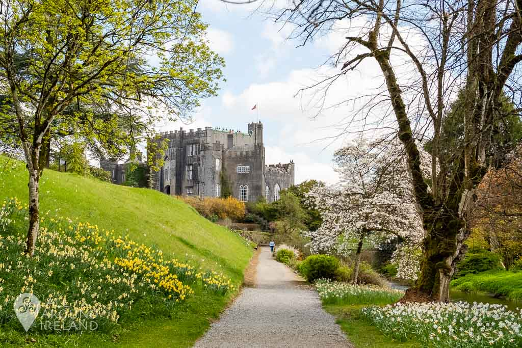 View towards Birr Castle from the banks of the river Camcor. Daffodils line the path on both sides.