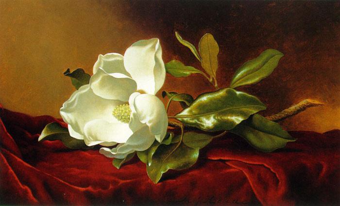 Paintings Reproductions Heade, Martin Johnson Single Magnolia on Red Velvet, c.1885-1895