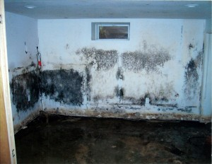 Mold remediation in Howard County, Anne Arundel County, Montgomery County, Prince George's County, Baltimore County, Baltimore City, Fairfax & DC