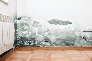 Don't let these mold myths fool you
