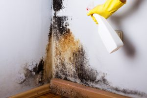 common types of mold all aspects waterproofing