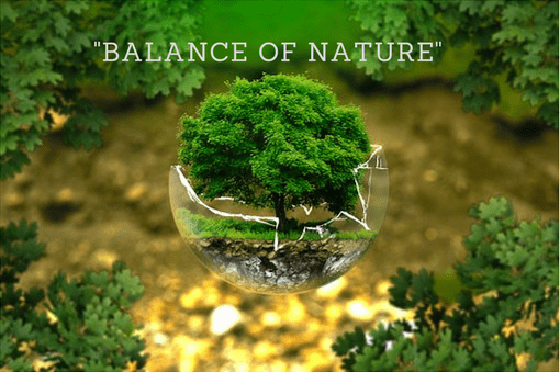 Balance of Nature   Definition of Balance of Nature ...