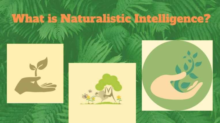 Naturalistic-intelligence