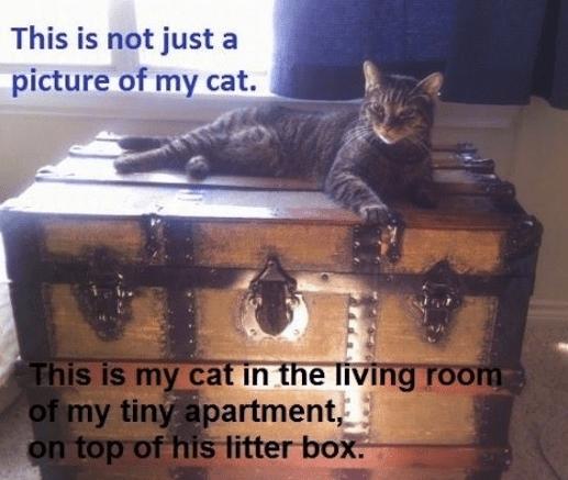 Hidden Litter Box 14 Ways To Hide It