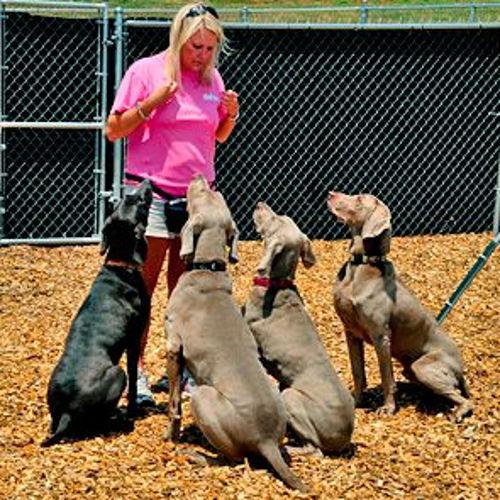 dog training do over