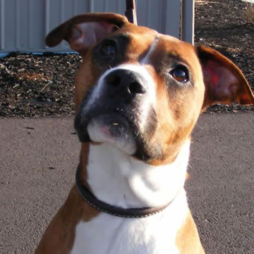 is crating dog harmful