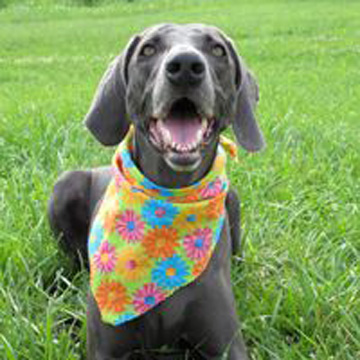 board your dog during spring break