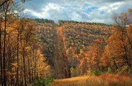South view of a pipeline swath forming the eastern boundary of the Detweiler Run Natural Area, Centre County–Huntingdon County line, within Rothrock State Forest. Photo: Nicholas A. Tonelli via Flickr