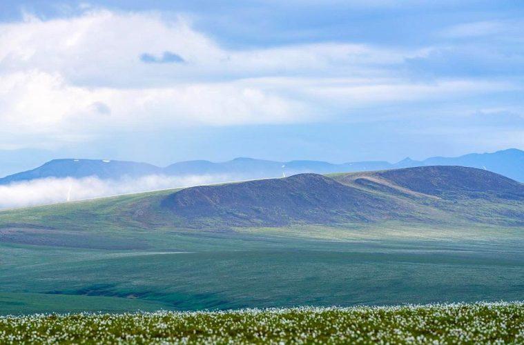 Arctic National Wildlife Reguge