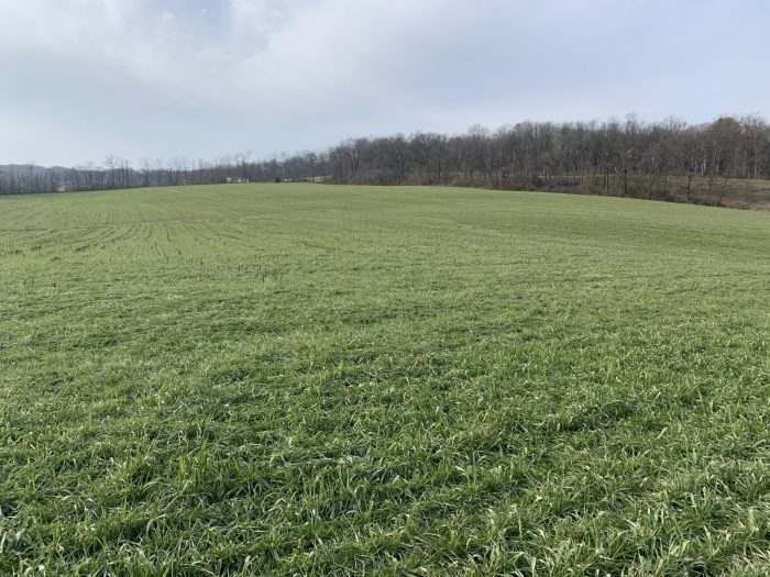 Dave McLaughlin's farm fields