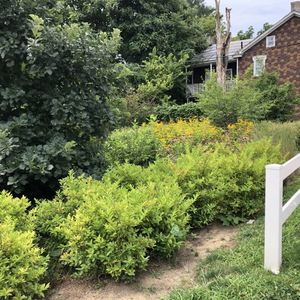 """Coneflowers and trees grow in the rain garden on the corner of Bailey and North 13th streets in Summit Terrace. """"These were little babies when we were doing this,"""" said Rafiyqa Muhammad, who helped create the garden. """"Everything has grown."""" Photo: Madison Goldberg / StateImpact Pennsylvania"""