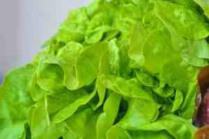 Salatblätter