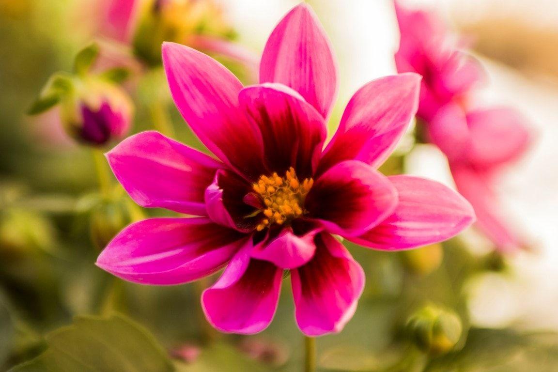 Ricetto fiore