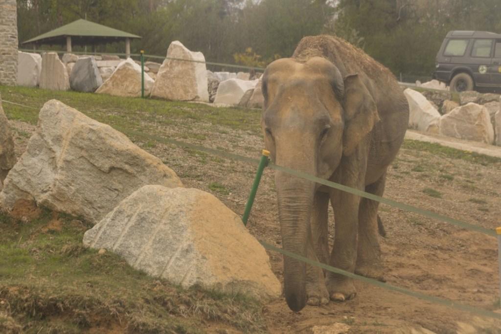 Maya sta bene adesso al Safari Park