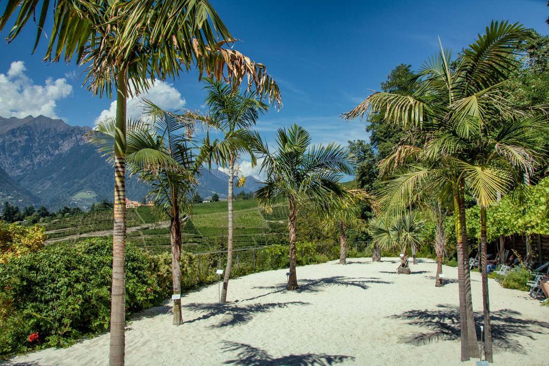 Spiaggia delle palme