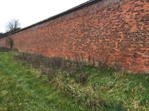 Pinery-vinery wall