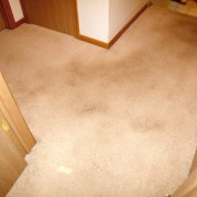 saint paul carpet cleaning