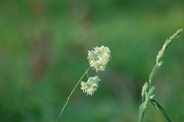 polleniefteraarsferien