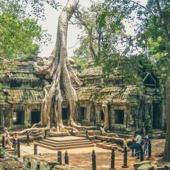 Ta Prohm in Angkor Wat