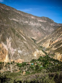 Oase im Colca Canyon in Peru