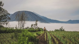 Farmer vor dem Nebelmeer