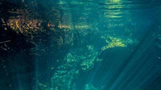 Cenote Cristal in Mexiko unterwasser