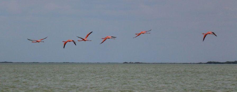 Fliegende Flamingos in Las Coloradas