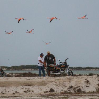 Flamingos und ein Motorrad