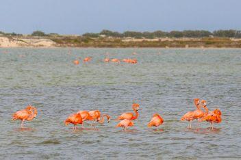 Flamingogruppe in Las Coloradas