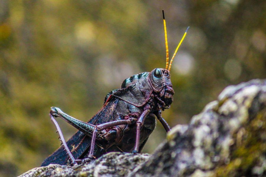 Insekt in Tikal
