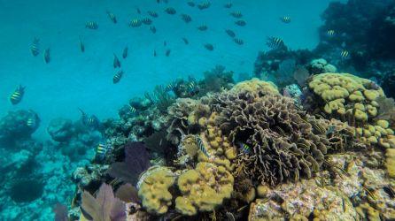 Unterwasserwelt von Caye Caulker
