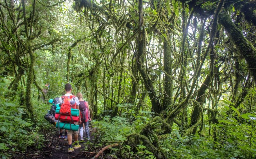 Rückweg vom Acatenango Vulkan