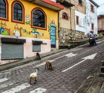 Ziegen auf der Straße von La Palma