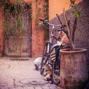 Katzen in Marrakesch