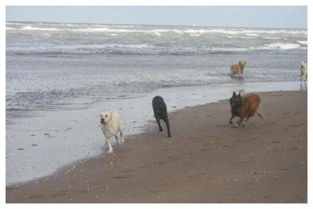hondenoppas3