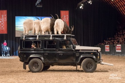 Nicht nur Hunde bekamen die Besucher der DOGLIVE Gala zu sehen. (Foto: Carsten Pöhler)