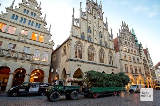 Die 20 Meter lange Tanne vor deem historischen Rathaus (Foto: Bührke)
