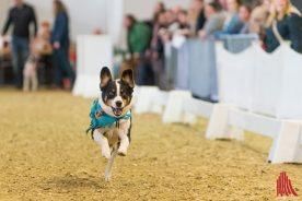 """Unter 4 Sekunden war eine gute Zeit auf der Rennbahn für """"jederhund"""". (Foto: Carsten Pöhler)"""