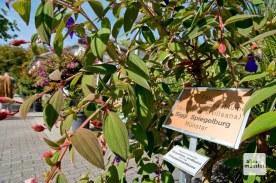 Prominente Paten haben der Idee der Pflanzenpatenschaft zu mehr Aufmerksamkeit verholfen (Foto: Michael Bührke)