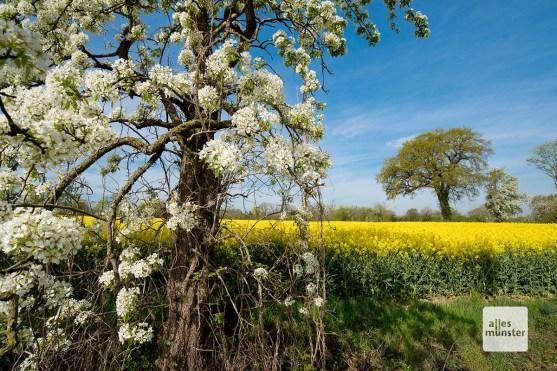 Im Frühjahr blühen überall entlang der Route die Obstbäume (Foto: Michael Bührke)