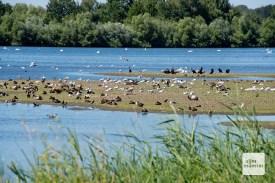 Die Rieselfelder dienen zahlreichen Vögeln als Rückzugs- und Brutgebiet. (Foto: Michael Bührke)