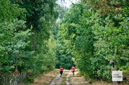 Die Hohe Ward ist ein beliebtes Naherholungsgebiet. (Foto: Michael Bührke)