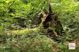 Im Wolbecker Tiergarten wird stellenweise die Natur sich selbst überlassen