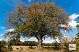 """Dieser beeindruckende Baum steht in der Nähe von """"Haus Spital""""."""