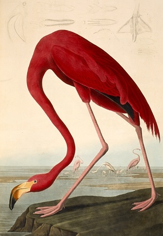 The Birds of America - TOP 10 MOST EXPENSIVE BOOKS EVER SOLD AT AUCTION