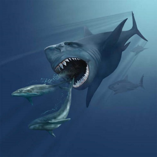 megalodon - Top 10 Greatest predators that have ever lived